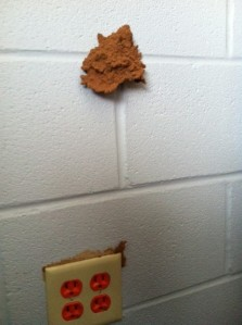 Termites can infiltration cinder block construction.